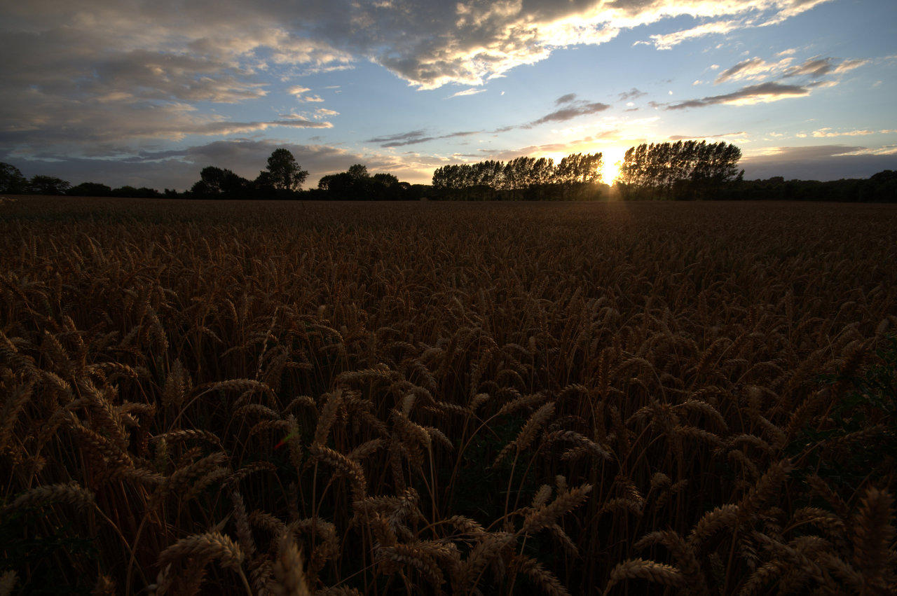 Grainy Sunset - Original